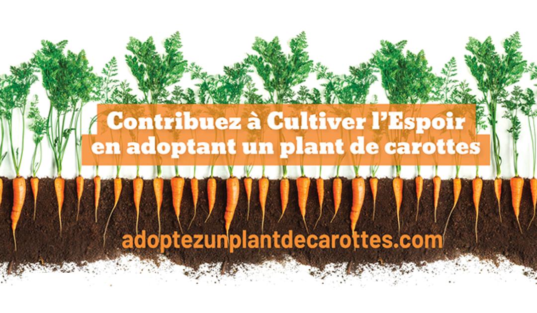 Pour Noël, adoptez un plant de carottes !